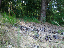 Bosrijke omgeving Limburg