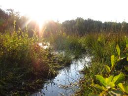 Zonsondergang waterrijke gebied
